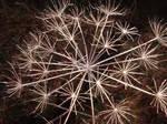 Natural Firework by dragonbarnesz