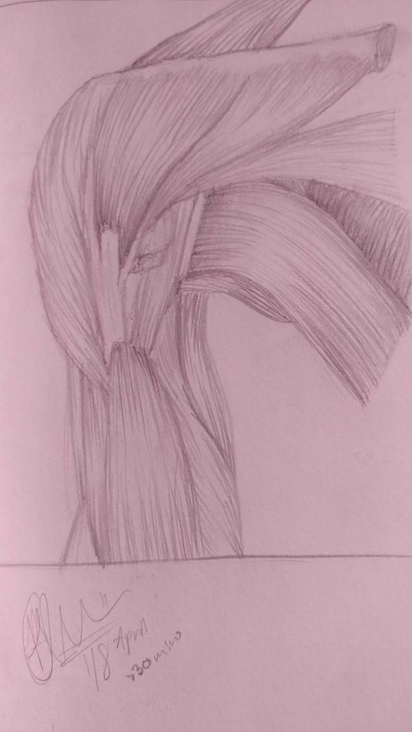056 Muscles by Dandelion4507