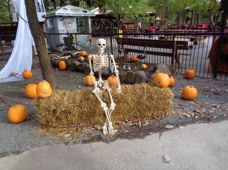 Skeleton in the Pumpkin Patch