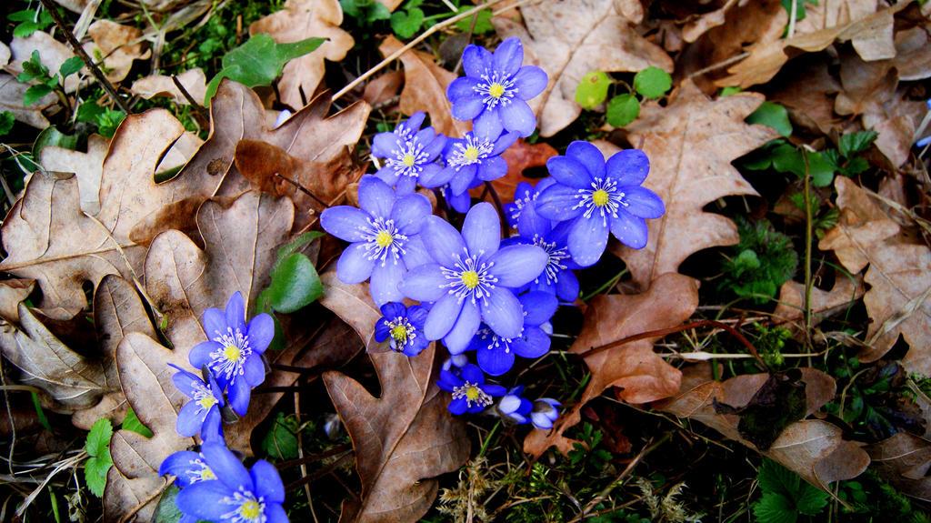 Flower 6 by Tanarotte