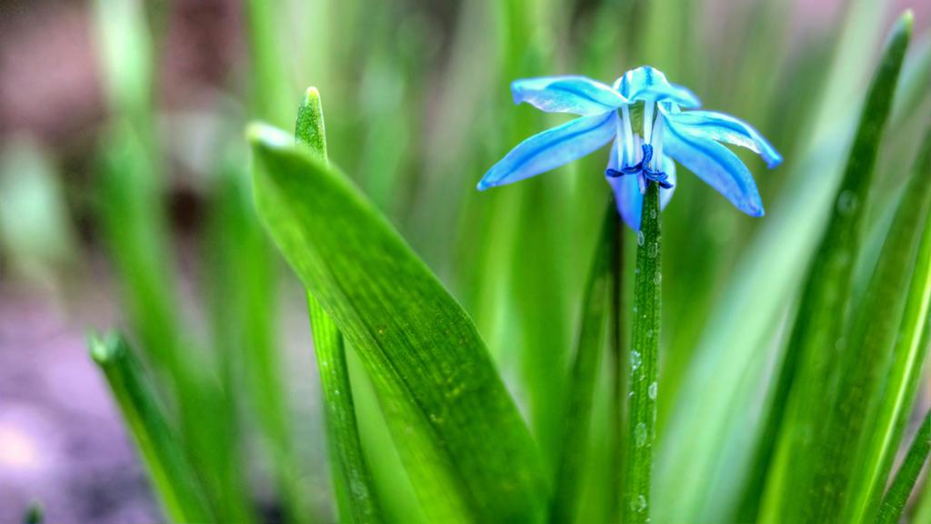 Flower 7 by Tanarotte