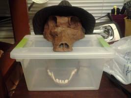 The Clay Skull