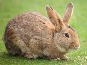 Gavin-The-Bunny's Profile Picture
