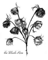 The Black Rose 00 by un-manga