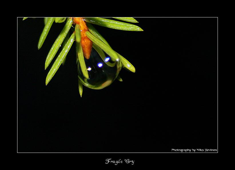 Fragile Cry by Lorvija