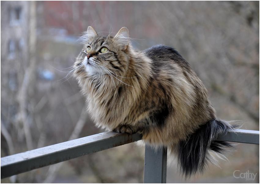 Balcony beast by Daywish