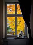 Bedroom window by Daywish