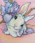 rabbit Nuvola