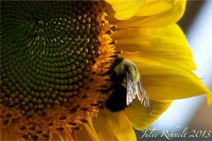Evening Nectar