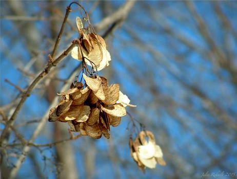 Winter's Blossoms
