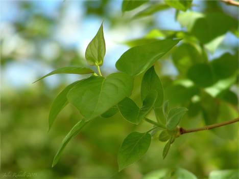 Fresh Spring Green