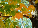 Autumn is Happening!