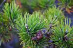 tree tips 2