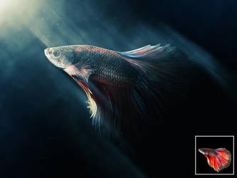 Drama Fish by NuwanP