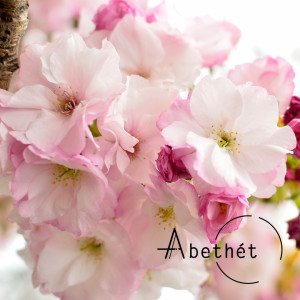 Abethet's Profile Picture