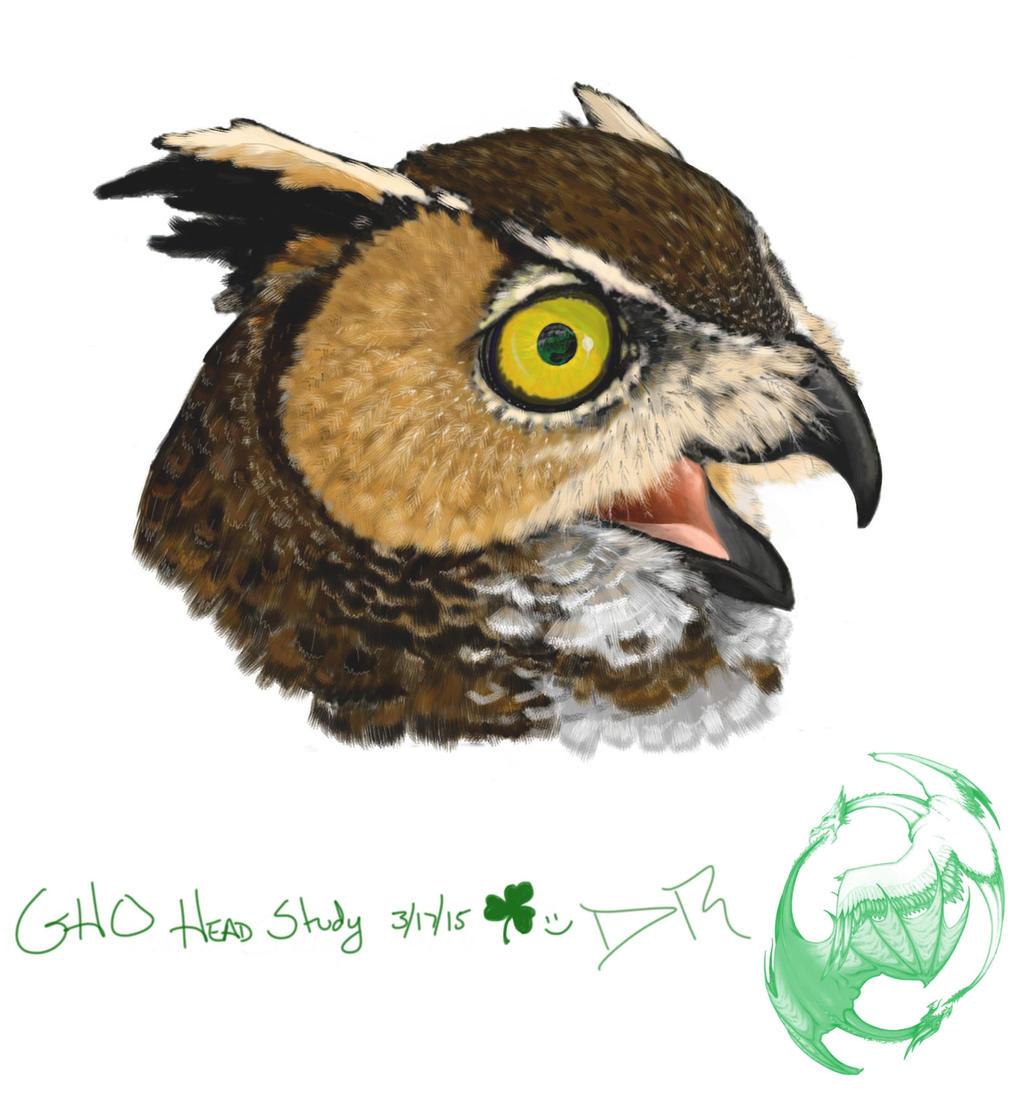 Owl Food Chain - Video & Lesson Transcript | Study.com