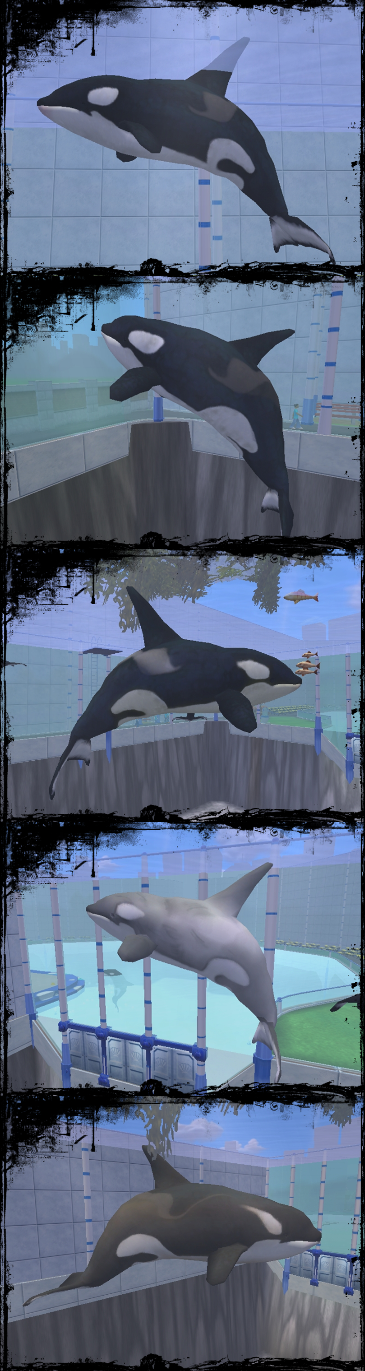 Orcas from Zoo Tycoon 2 by Call-Me-Starlet on DeviantArt