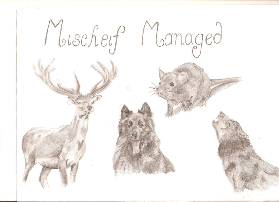Moony, Wormtail, Padfoot and Prongs by Chickleberry on ...