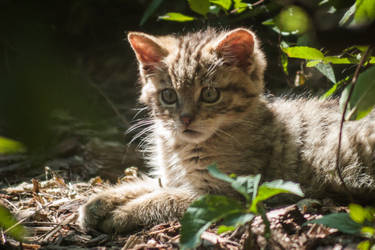 Little hunter by Mocz