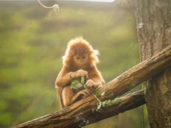 Monkey monk by Mocz