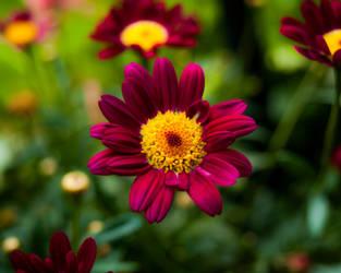 Flower by Mocz