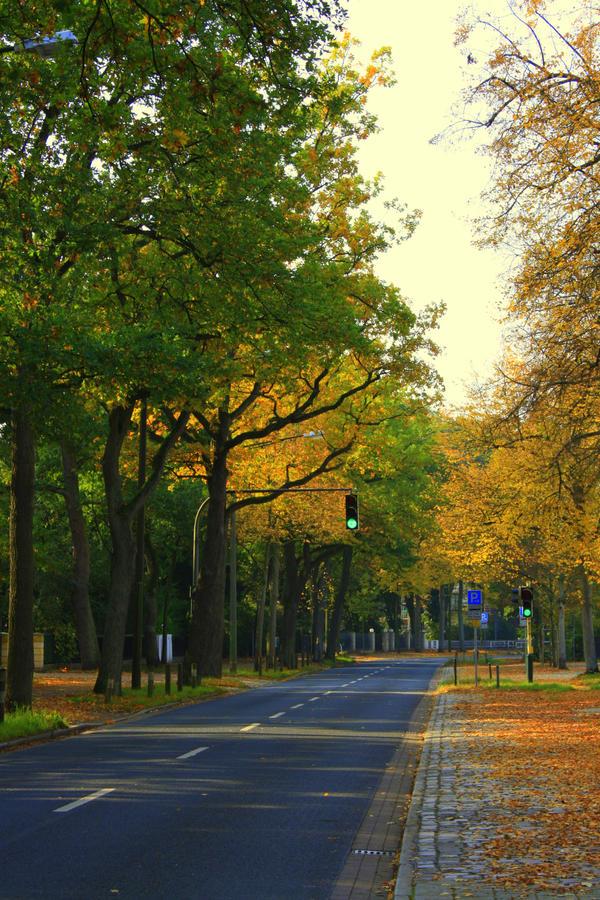 Autumn streets by dmakreshanski