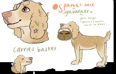 Spaniel Mix Adopt