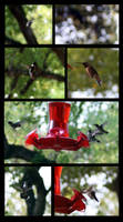 coffee, hummers, and bokeh by LeeAnneKortus