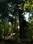 Hummingbird 01 by LeeAnneKortus