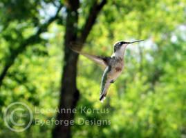 hummingbird 03 by LeeAnneKortus