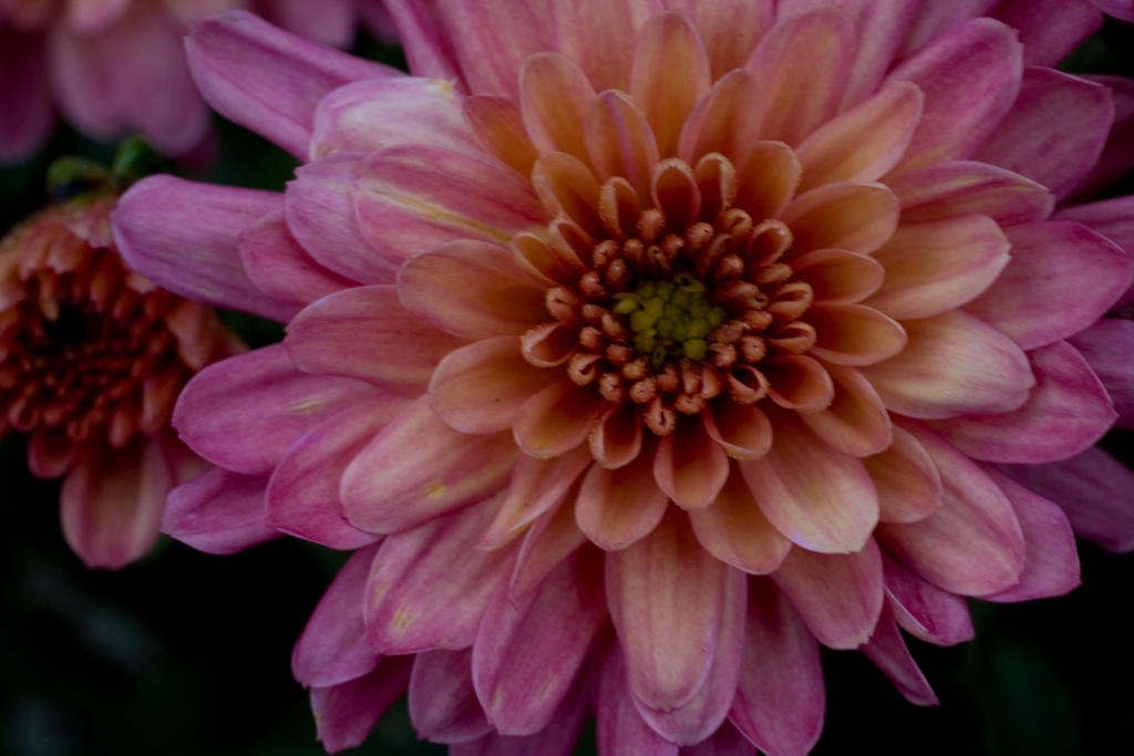 Mums the word... by LeeAnneKortus