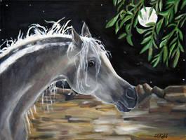 Desert Moonlight by LeeAnneKortus