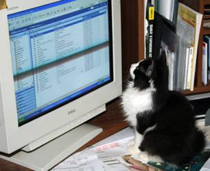 Chessie checks email by LeeAnneKortus