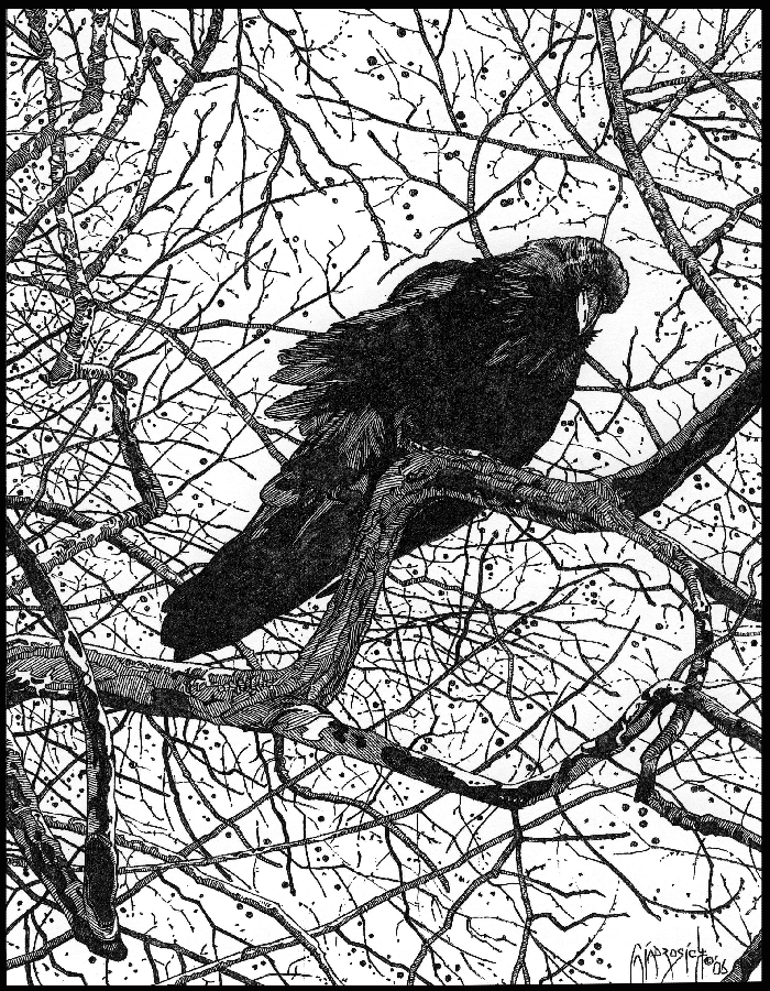 http://fc08.deviantart.net/fs15/f/2007/019/0/5/Raven_Tales__Finished_Pencil_by_giadrosich.jpg