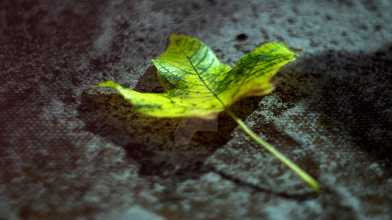Leaf Wallpaper 2560x1440 by FuckOffffff