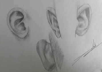 Ears study...