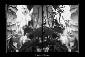 Depth of Flower