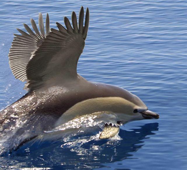 Pelikanus by cyberarmy56