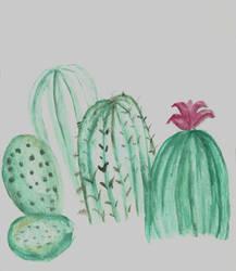 Cactus Study