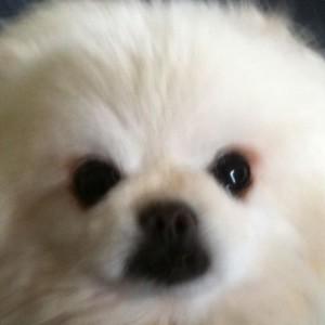 cedricluk's Profile Picture