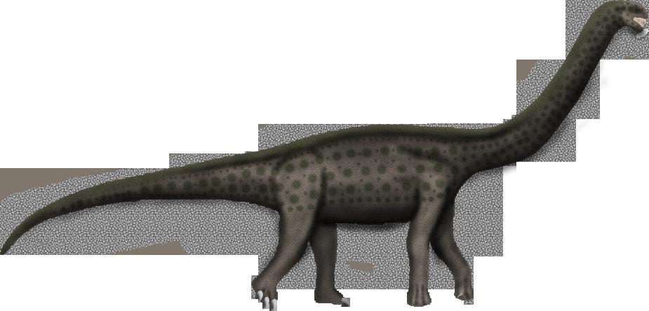 Austrosaurus mckillopi by SpinoInWonderland