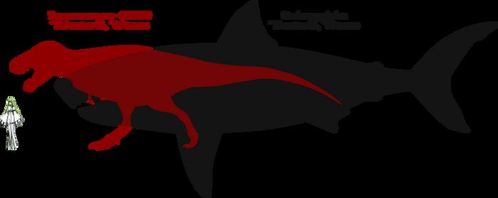 Tyrannosaurus and Megalodon size comparison