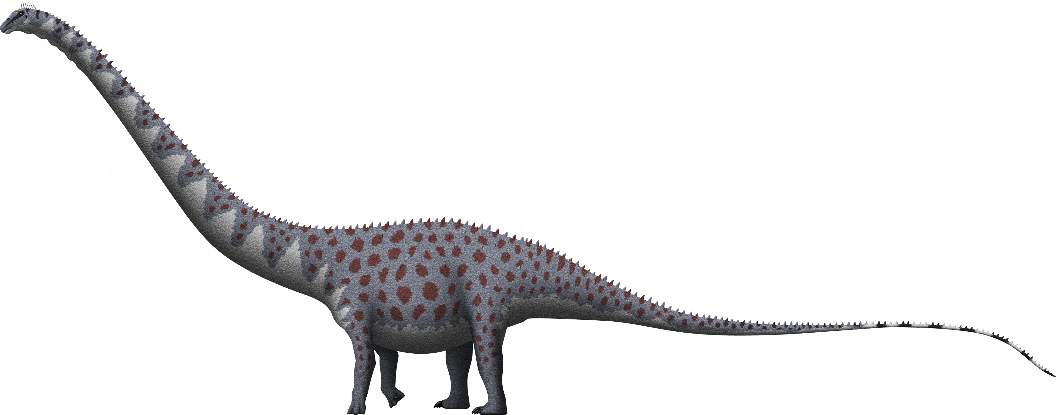 Supersaurus vivianae