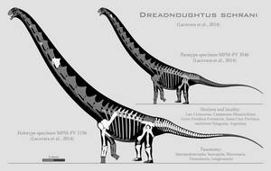 Dreadnoughtus schrani skeletal reconstruction by SpinoInWonderland