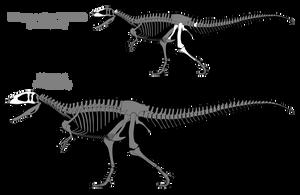 Carcharodontosaurus saharicus skeletals [2015] by SpinoInWonderland