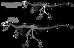 Carcharodontosaurus saharicus skeletals (2015)