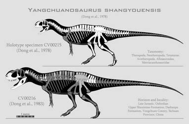 Yangchuanosaurus shangyouensis skeletals by SpinoInWonderland