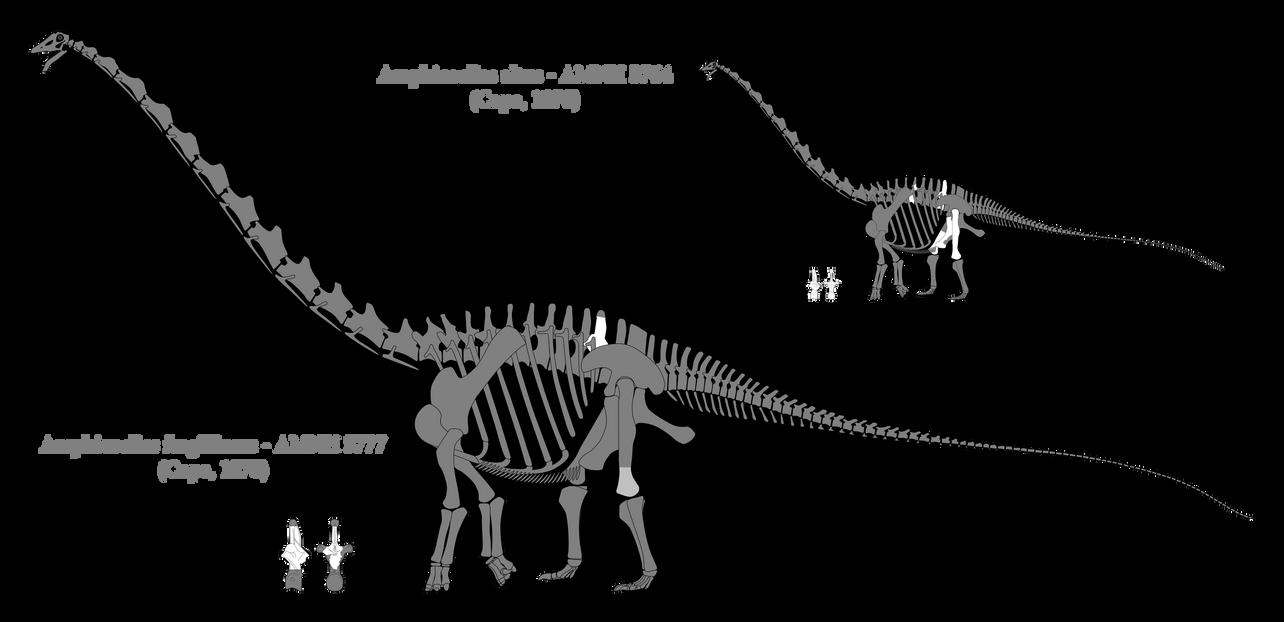 Amphicoelias skeletal reconstructions by SpinoInWonderland