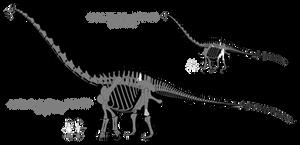 Amphicoelias skeletal reconstructions (2016)