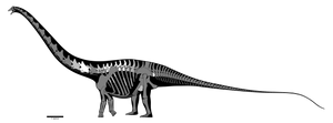 Supersaurus lourinhanensis skeletal reconstruction